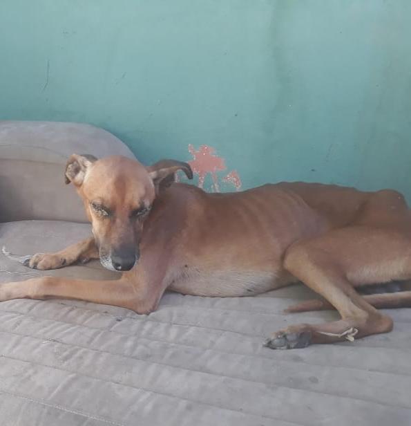 Cachorro encontrado na casa foi avaliado com desnutrição (Foto: Divulgação/PA)