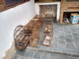 Gaiolas com as aves silvestres que estavam em cativeiro (Foto:Divulgação/PA)