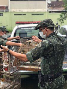 Policiais ambientais recolhem gaiolas com as aves que estavam em cativeiro (Foto:Divulgação/PA)