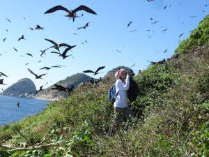 Arquipélago de Alcatrazes - Foto: Patrick Pina