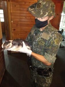 Polícia Ambiental resgata pinguim em Caraguatatuba