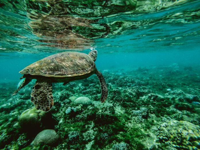 Série de webinars sobre o Futuro do Oceano começa nesta quinta (16) - Imagem: Belle Co