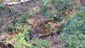 Configura crime ambiental desmatar próximo à nascente de rios (Imagem: Polícia Ambiental)