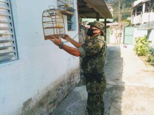 As aves apreendidas em Caraguatatuba foram soltas na natureza (Imagem: Polícia Ambiental)