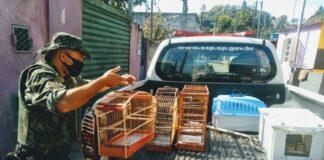 Pássaros silvestres resgatados e posteriormente libertos (Imagem: Polícia Ambiental)