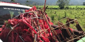 O balão, de aproximadamente 15 metros, caiu dentro das dependências do Parque Serra do Mar (Imagem: Polícia Ambiental)