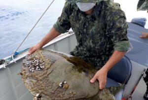 Tartaruga Oliva estava debilitada (Imagem: Polícia Ambiental)