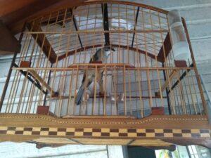 Pássaro resgatado de torneio irregular de canto (Foto: PM/Divulgação)