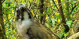 Pássaro solto em área de proteção em Caraguatatuba