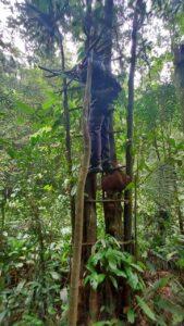 trepeiros usados na caça