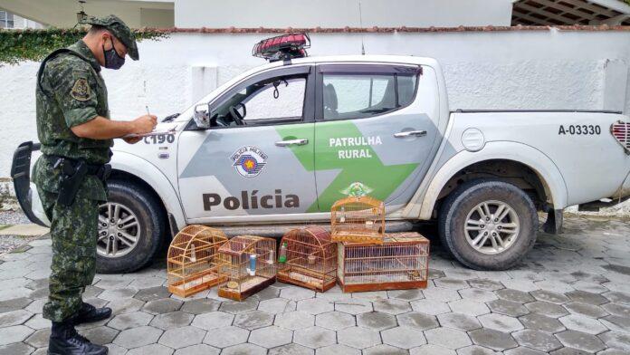Aves estavam em gaiola na garagem de uma casa (Foto: Polícia Ambiental/Divulgação)