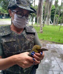 O filhote de Araçari-banana foi entregue para a Fundação Animália ( Foto: Polícia Ambiental/Divulgação)