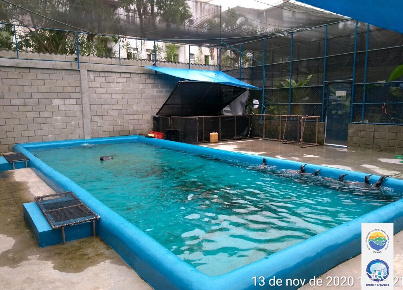 Pinguins-de-Magalhães em reabilitação no Centro de Reabilitação e Despetrolização de Ubatuba (CRD) do Instituto Argonauta. (Créditos: Divulgação/Instituto Argonauta)