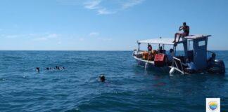 Pinguins foram soltos em alto mar na região de Cananéia (Créditos: Divulgação/ IPeC)